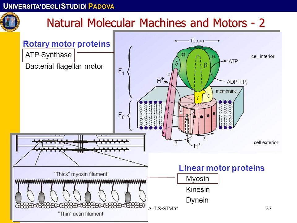 Natural Molecular Machines and Motors - 2