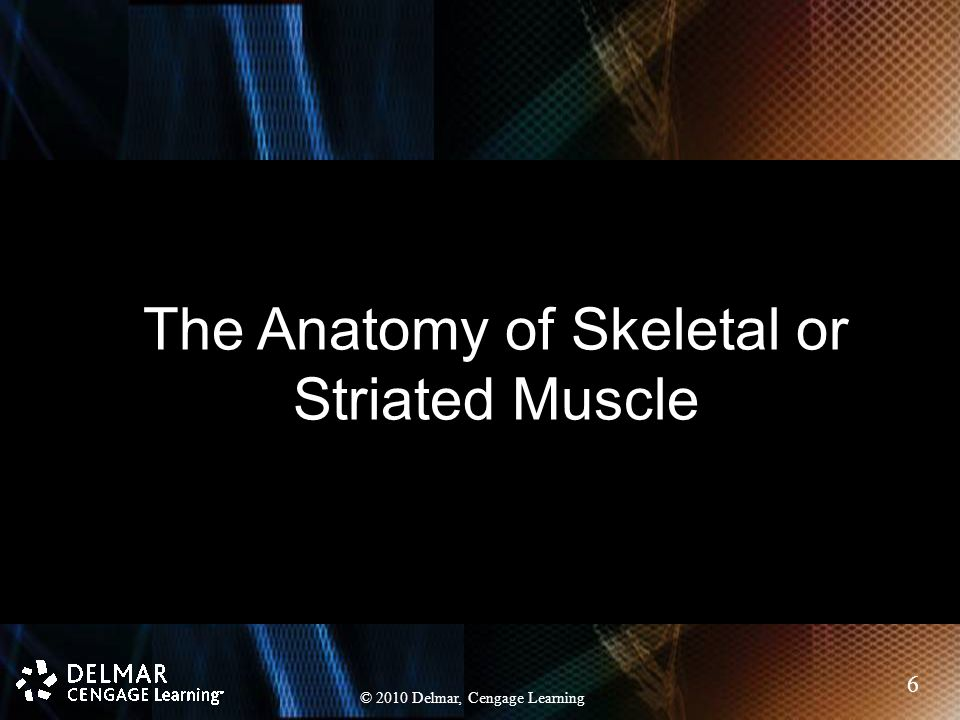 Chapter 9 The Muscular System. Chapter 9 The Muscular System. - ppt ...