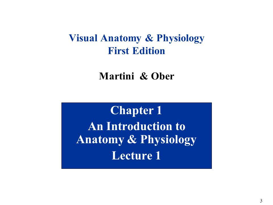 Atractivo Visual Anatomy And Physiology Martini Componente ...