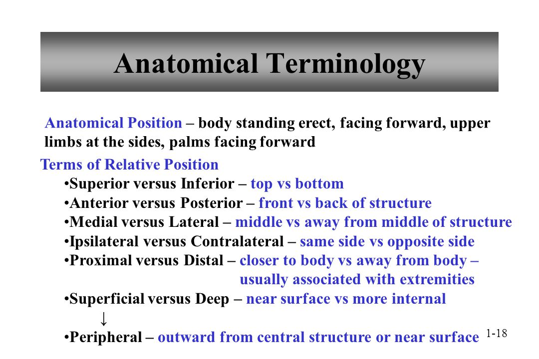 Anatomical Terminology Relative Position WiscOnline OER 6652511 ...