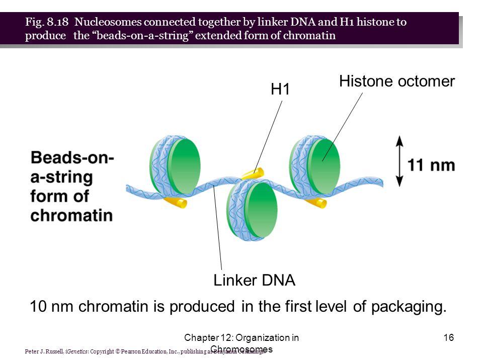 Genome Organization. - ppt download