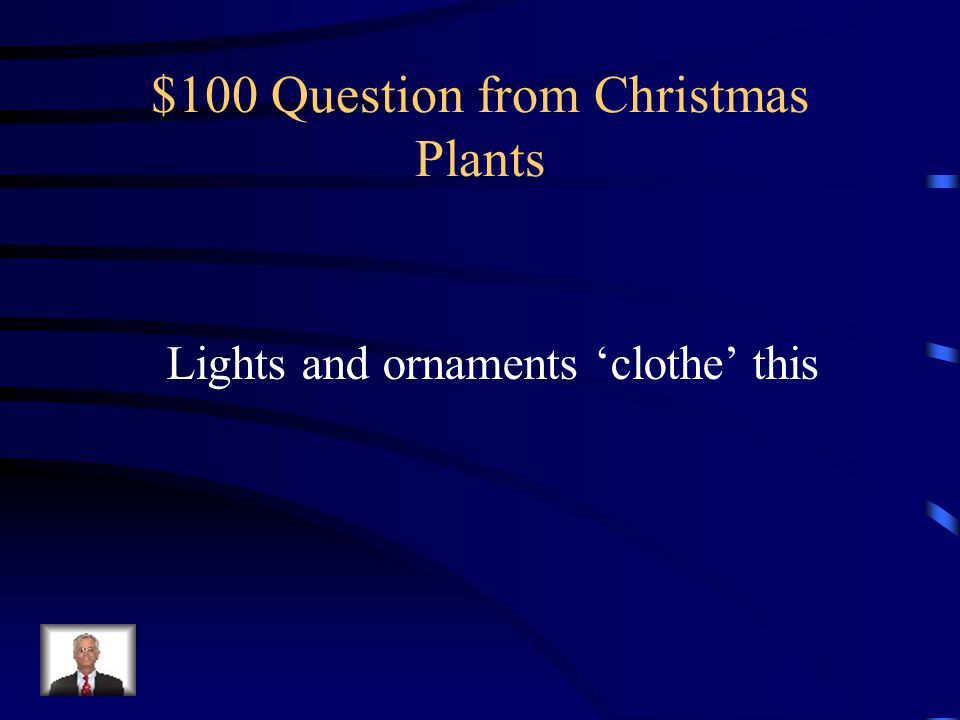 $100 Question from Christmas Plants