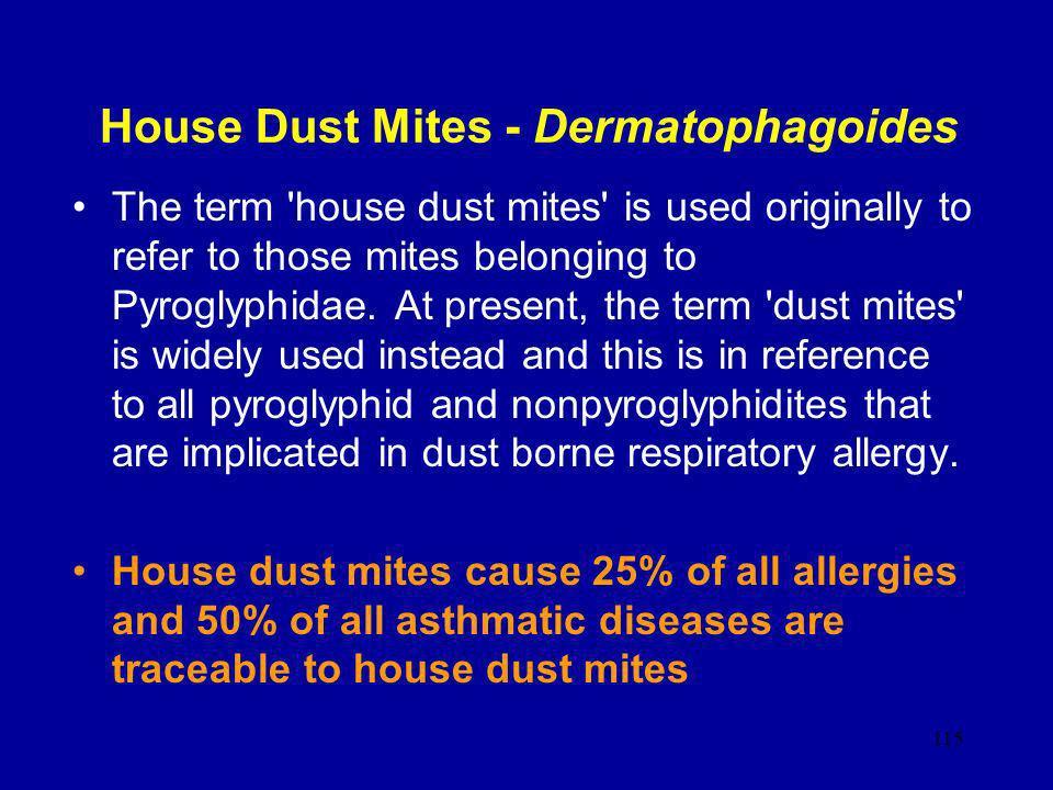 House Dust Mites - Dermatophagoides