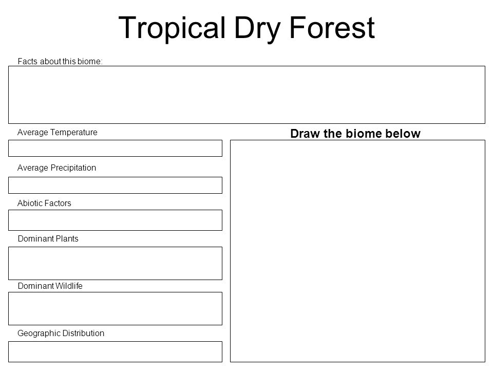 how to draw a tropical forest