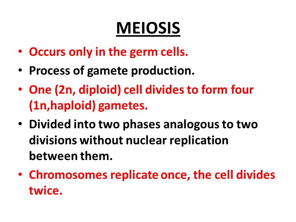 Meiosis in Animals - Exercise ppt video online download