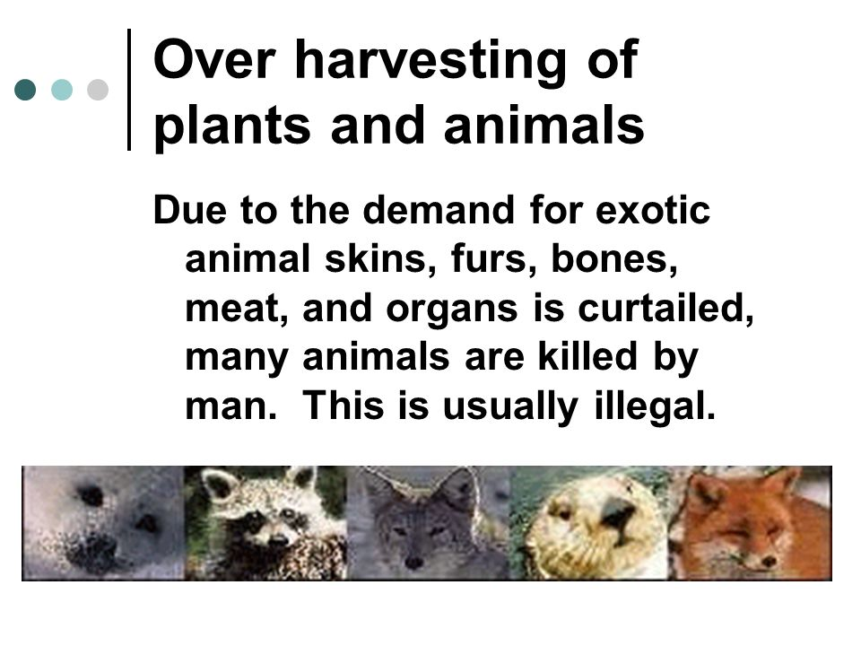Over harvesting of plants and animals