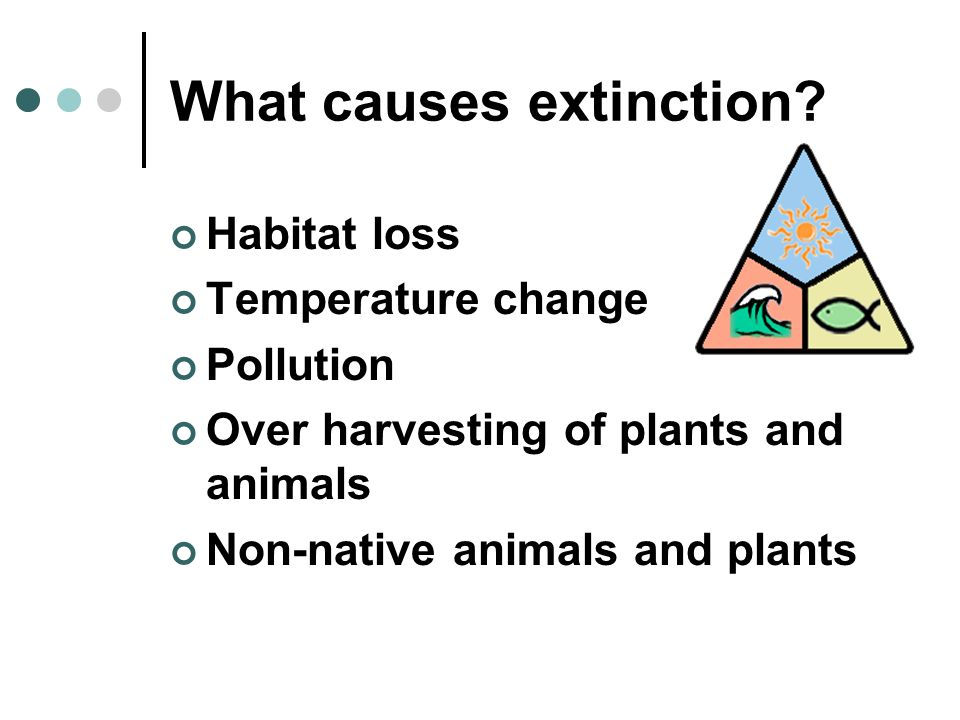 What causes extinction