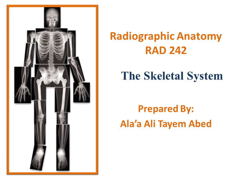 Radiographic Anatomy RAD 242