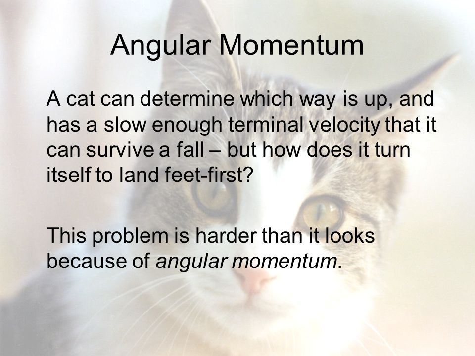 Can A Cat Survive A Terminal Velocity Fall