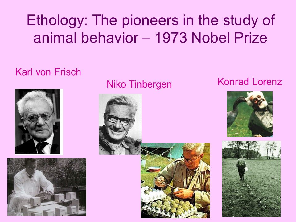 an analysis of the intelligence of animals and animal behavior Welfare of people and animals  to knowledge of behavior animal research has been the major contributor to our knowledge of  intelligence other studies have.