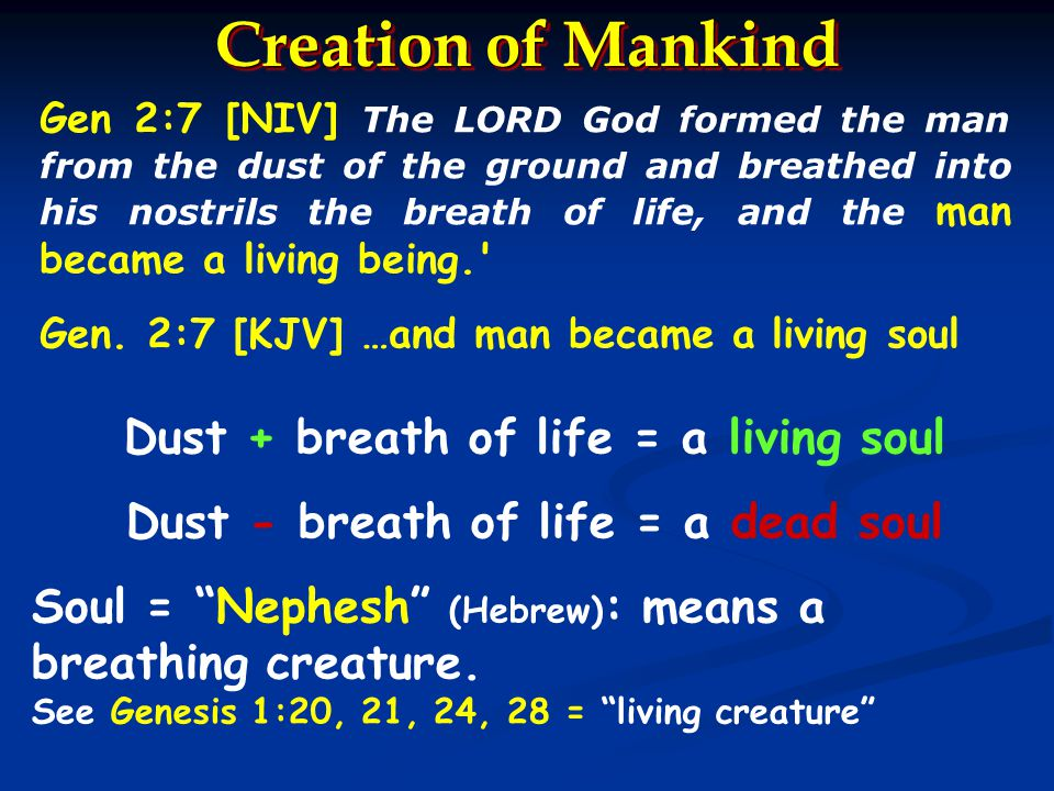 Living Soul : Basic Bible Teaching Lesson 2 - ppt download