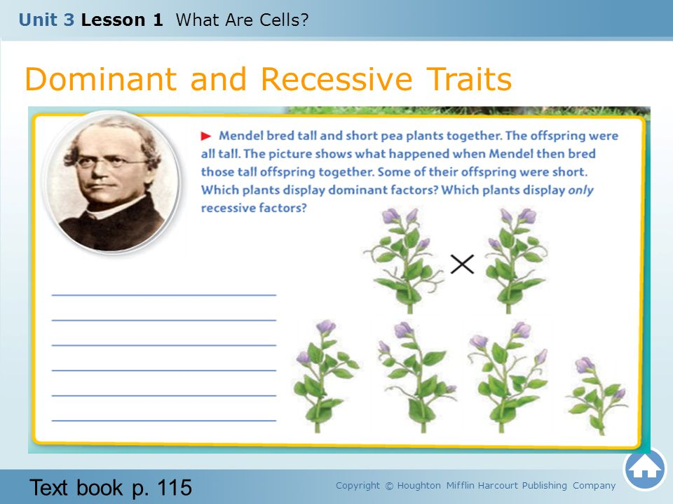 Unit 3 lesson 1 what are cells ppt download 36 dominant and recessive traits ccuart Choice Image