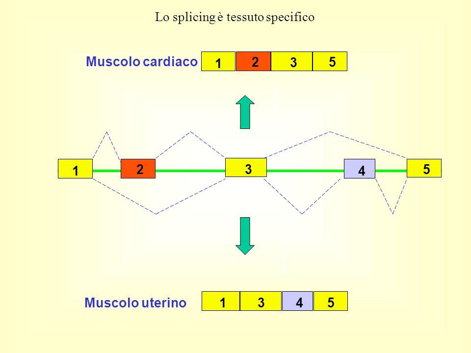 Lo splicing è tessuto specifico