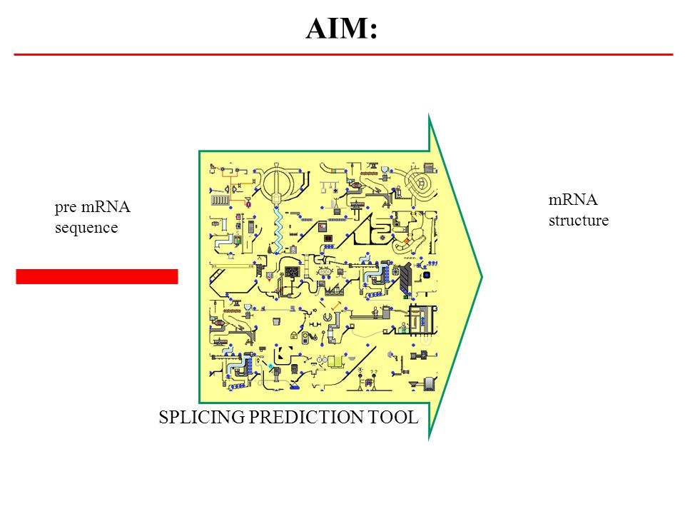 AIM: mRNA structure pre mRNA sequence SPLICING PREDICTION TOOL