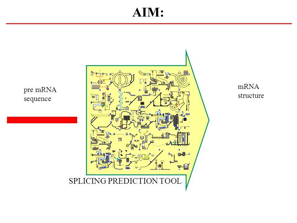 AIM: mRNA structure pre mRNA sequence SPLICING PREDICTION TOOL