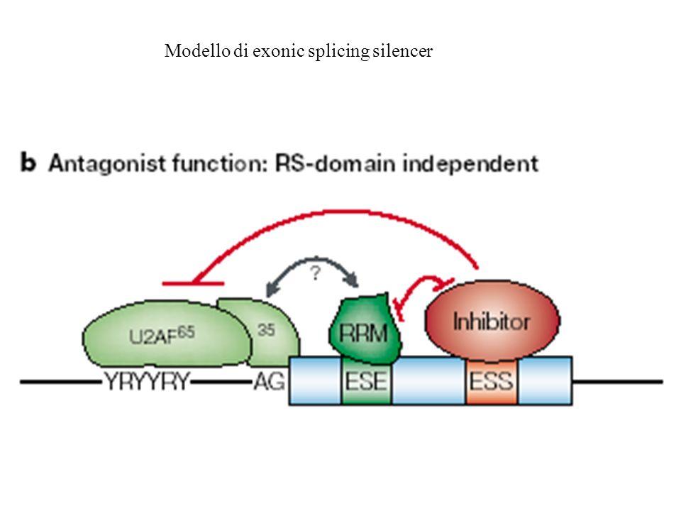 Modello di exonic splicing silencer