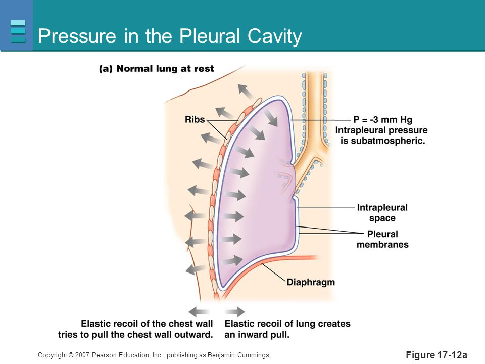 Pressure in the Pleural Cavity