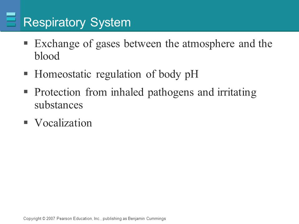 Respiratory System Exchange of gases between the atmosphere and the blood. Homeostatic regulation of body pH.