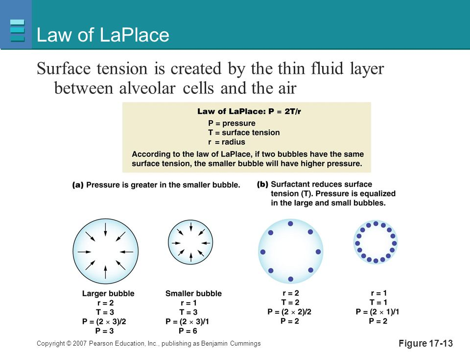 Law of LaPlace Surface tension is created by the thin fluid layer between alveolar cells and the air.