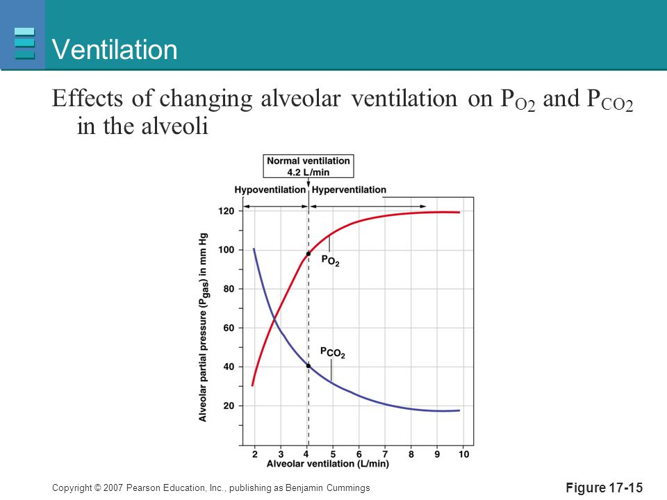 Ventilation Effects of changing alveolar ventilation on PO2 and PCO2 in the alveoli Figure 17-15
