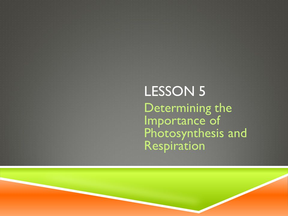 The significant roles of photosynthesis and