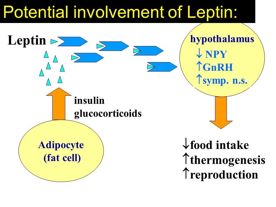 Potential involvement of Leptin: