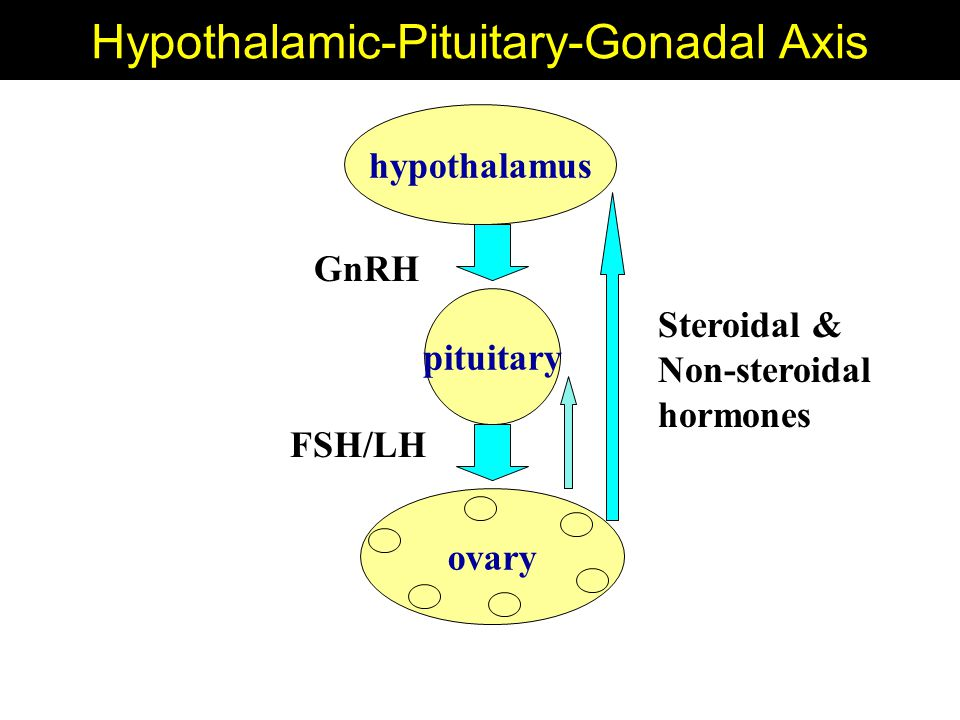 Hypothalamic-Pituitary-Gonadal Axis