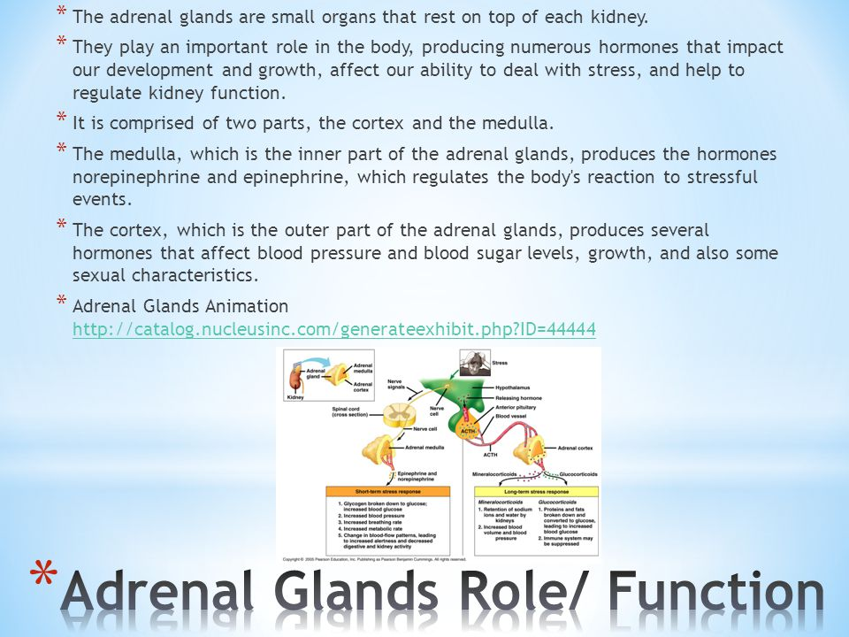 Adrenal Glands Role/ Function