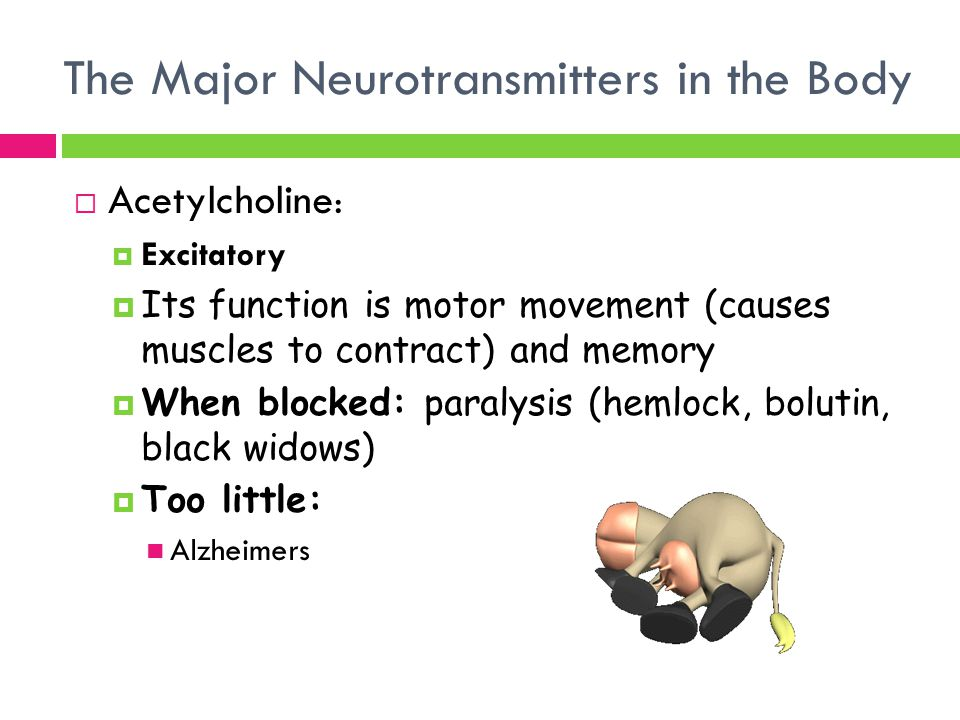 Neurotransmitter - Neurotransmitters' Role In Memory And Learning