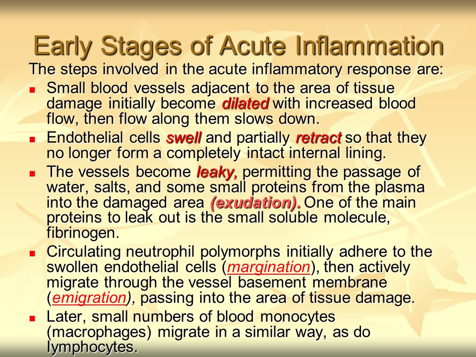 stages in acute inflammatory response Lecture 11: inflammatory response dr  what are the stages of acute  cells to have other types of behaviors -- including enhancing inflammatory response.