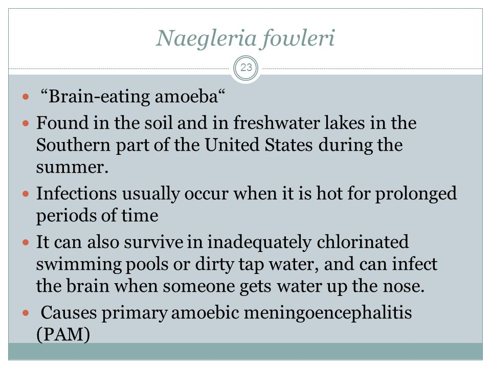 Subkingdom Protozoa First Animal Ppt Download