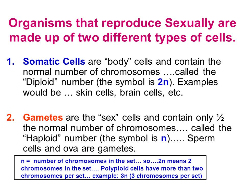 chromosomes in sex cells