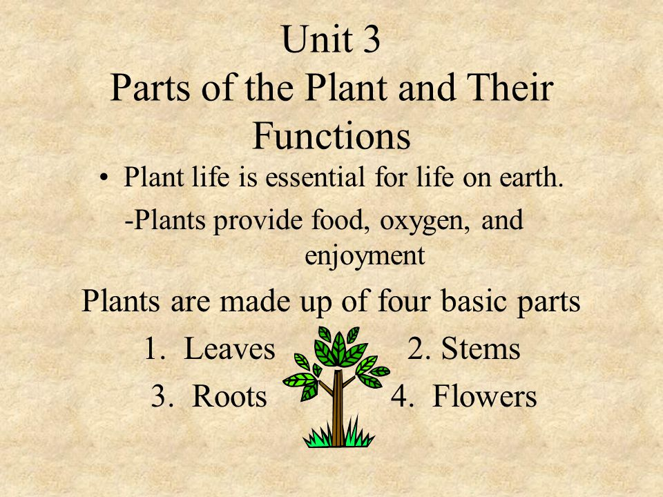 Unit 3 Parts of the Plant and Their Functions - ppt download