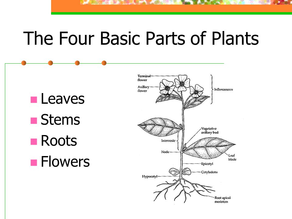The Four Basic Parts of Plants