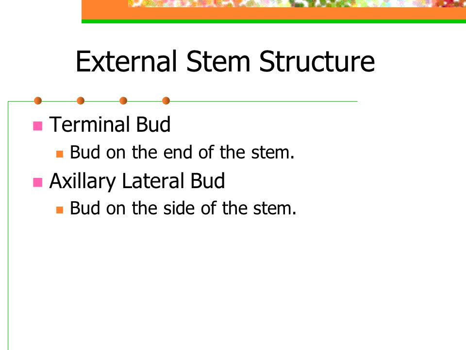 External Stem Structure