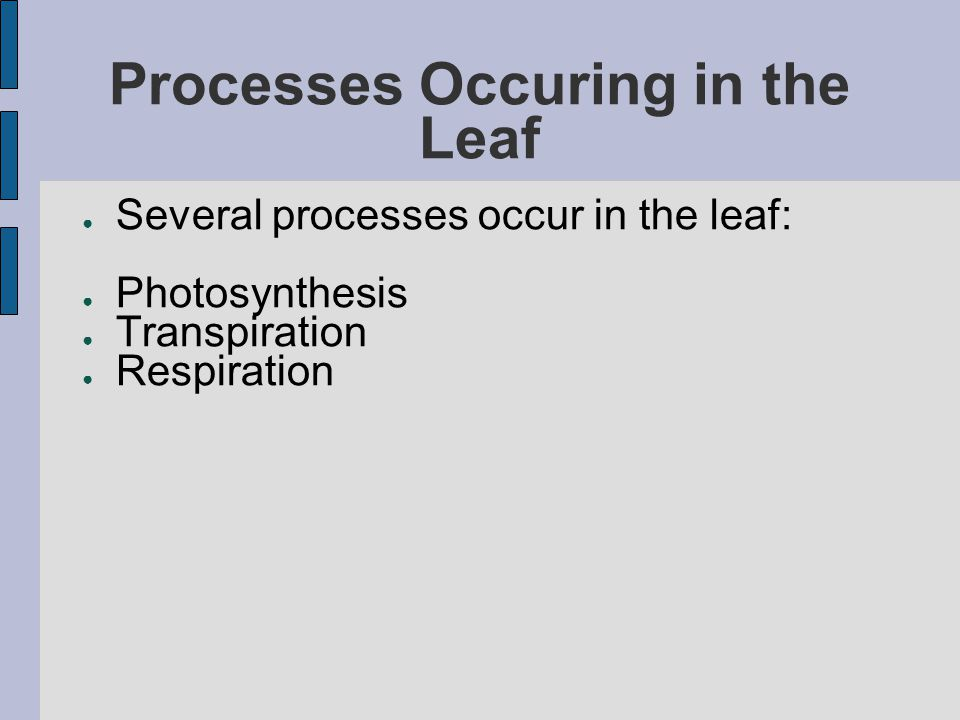 Processes Occuring in the Leaf