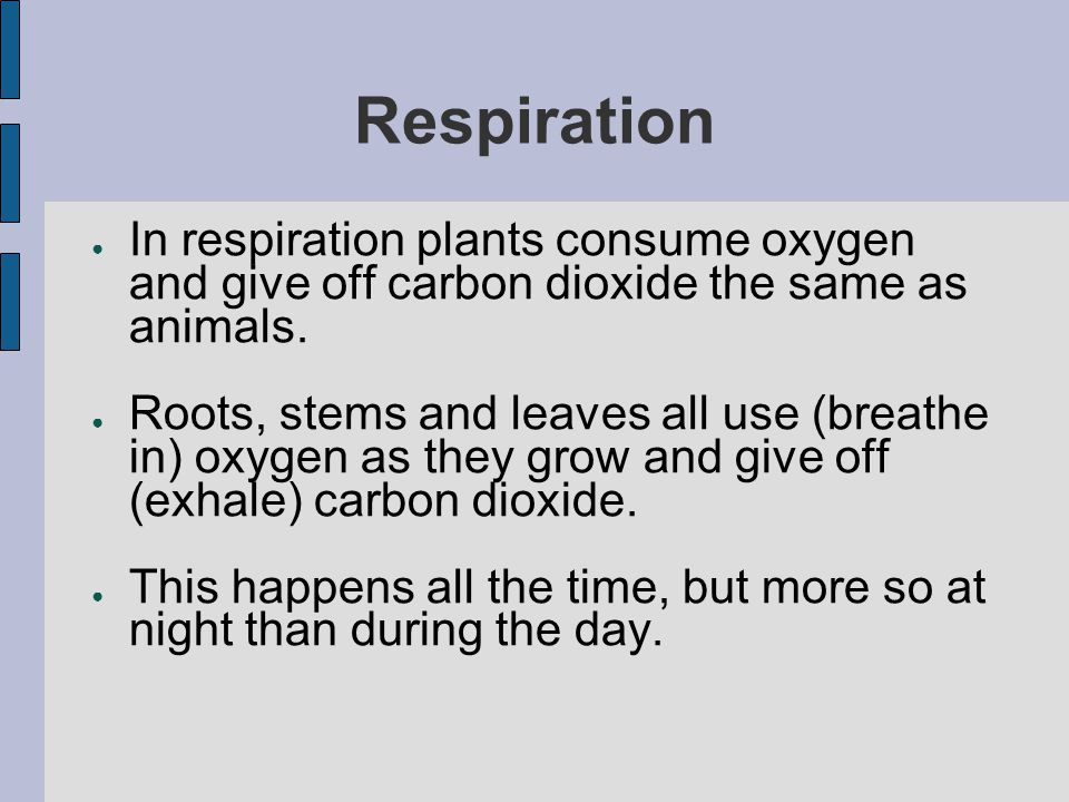 Respiration In respiration plants consume oxygen and give off carbon dioxide the same as animals.