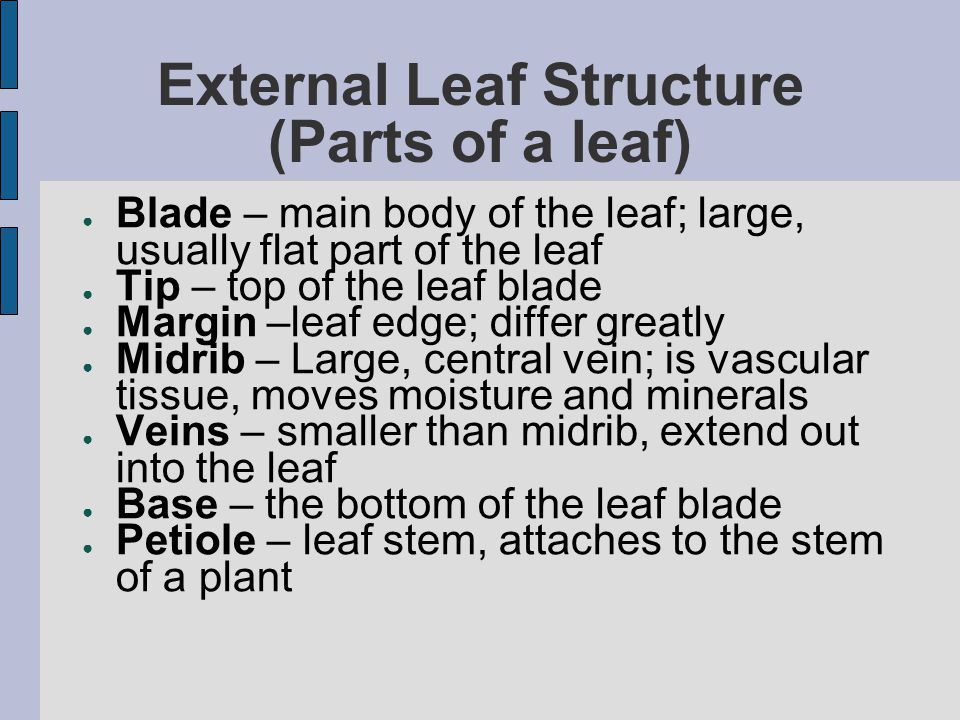 External Leaf Structure (Parts of a leaf)
