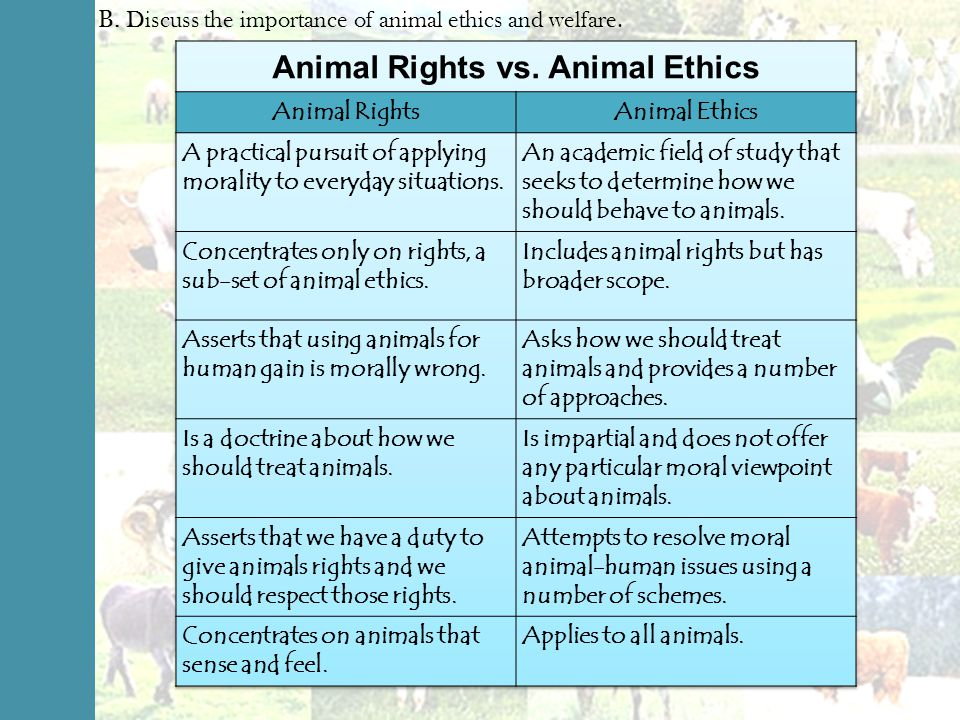 An introduction to the importance of animal rights