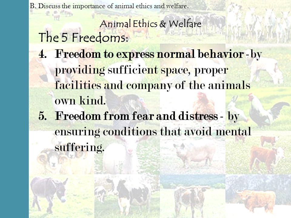 discuss the importance of ethics in For many years, my focus was on ethics—particularly organizational ethics as an  undergraduate at georgetown university, i majored in philosophy and.