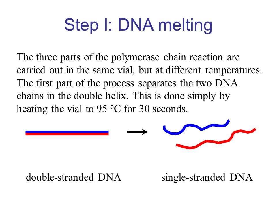 Step I: DNA melting The three parts of the polymerase chain reaction are. carried out in the same vial, but at different temperatures.