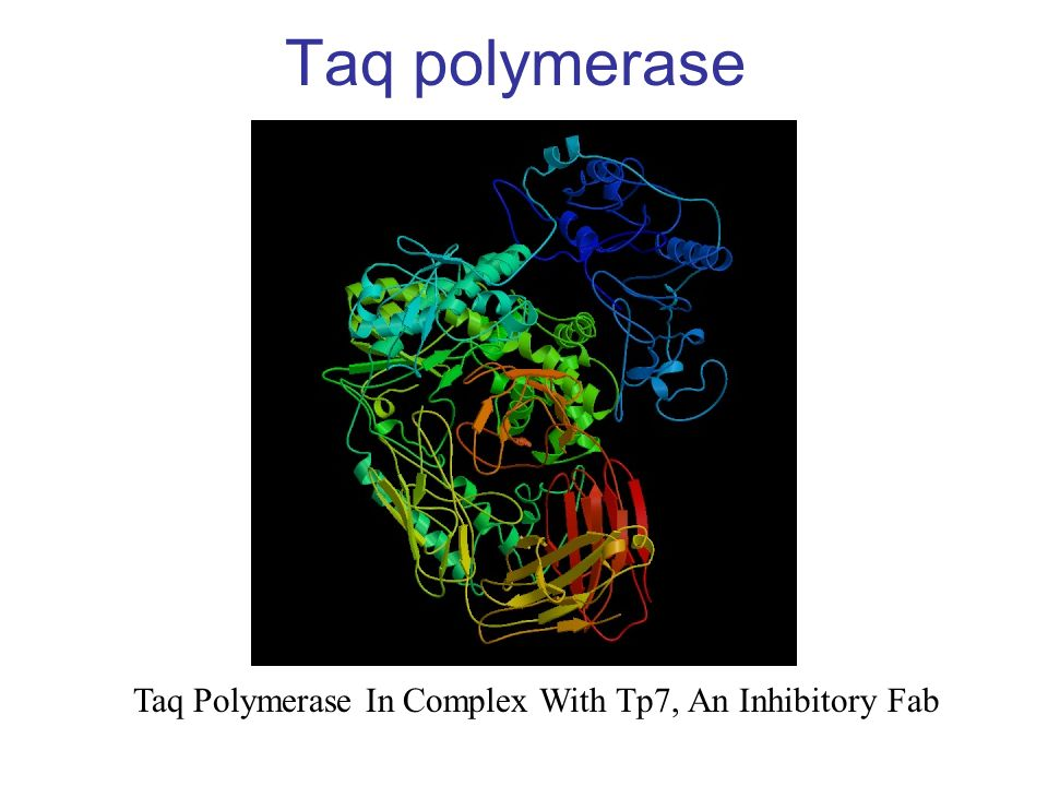 Taq polymerase Taq Polymerase In Complex With Tp7, An Inhibitory Fab