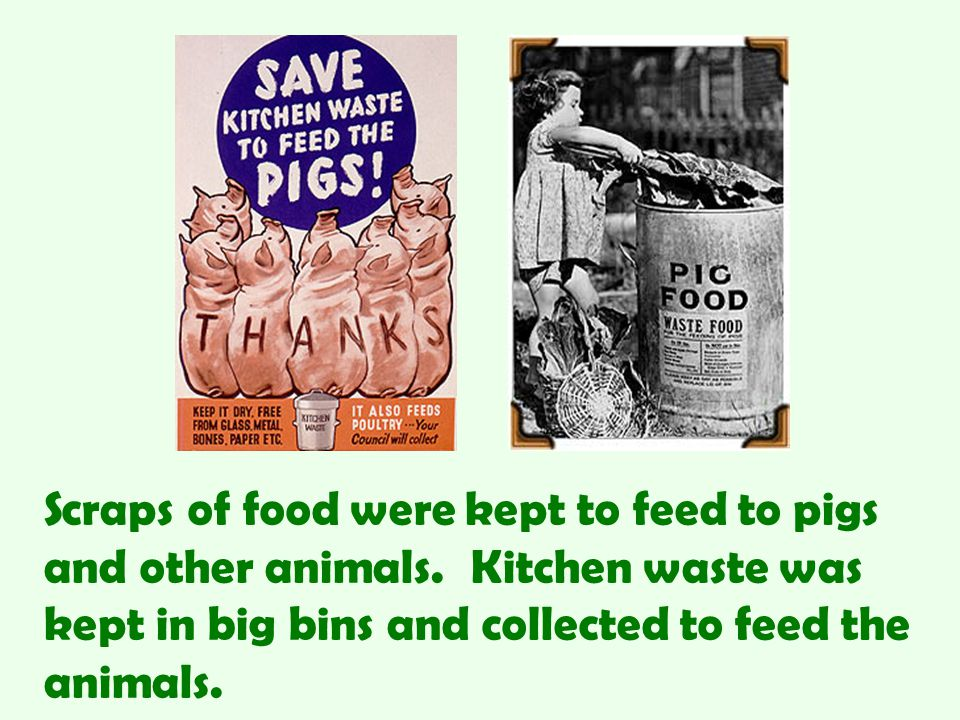Scraps of food were kept to feed to pigs and other animals
