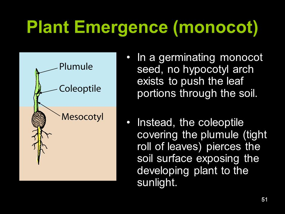 Plant growth development seed germination ppt video for Soil sentence