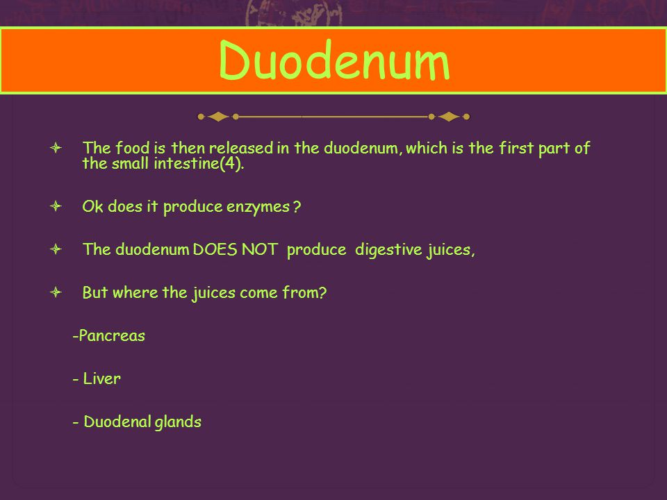 Duodenum The food is then released in the duodenum, which is the first part of the small intestine(4).