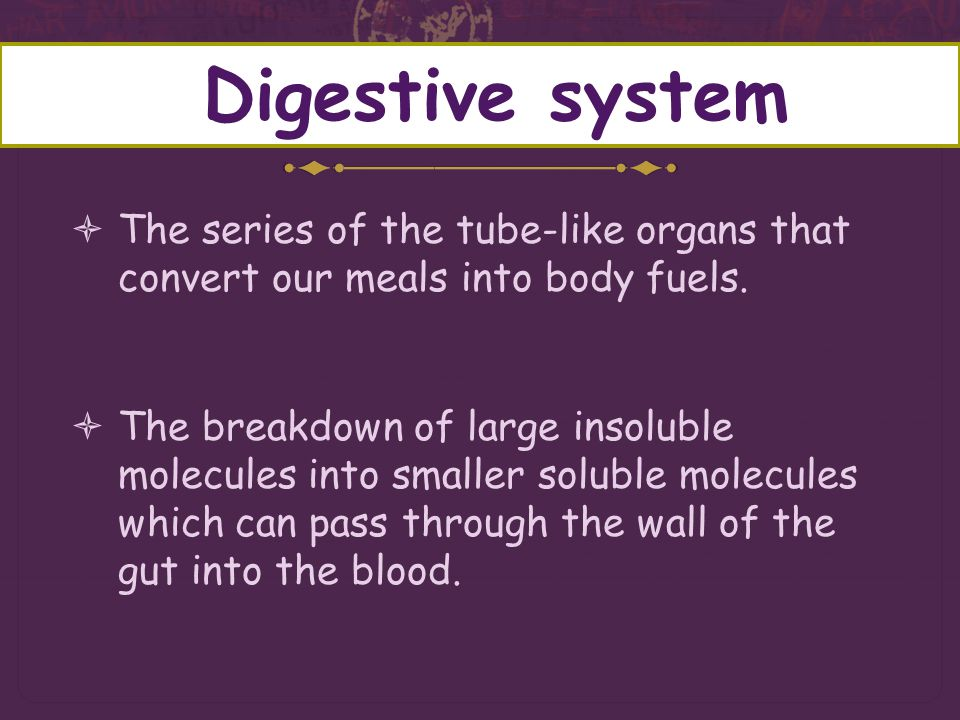 Digestive system The series of the tube-like organs that convert our meals into body fuels.