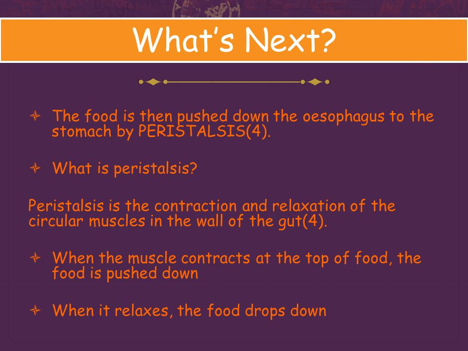 What's Next The food is then pushed down the oesophagus to the stomach by PERISTALSIS(4). What is peristalsis