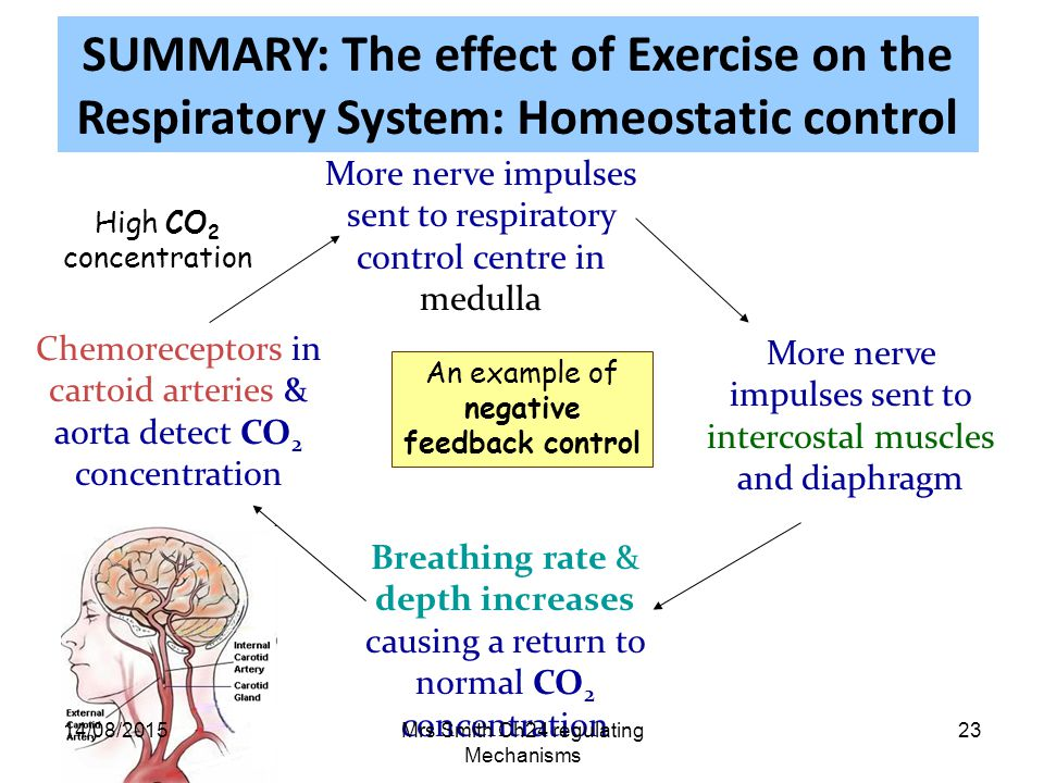 concept homeostasis with reference to the control essay Homeostasis definition, the tendency of a system, especially the physiological system of higher animals, to maintain internal stability, owing to the coordinated.