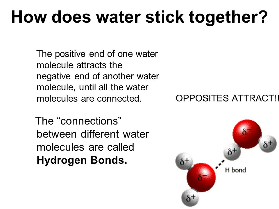 How does water stick together