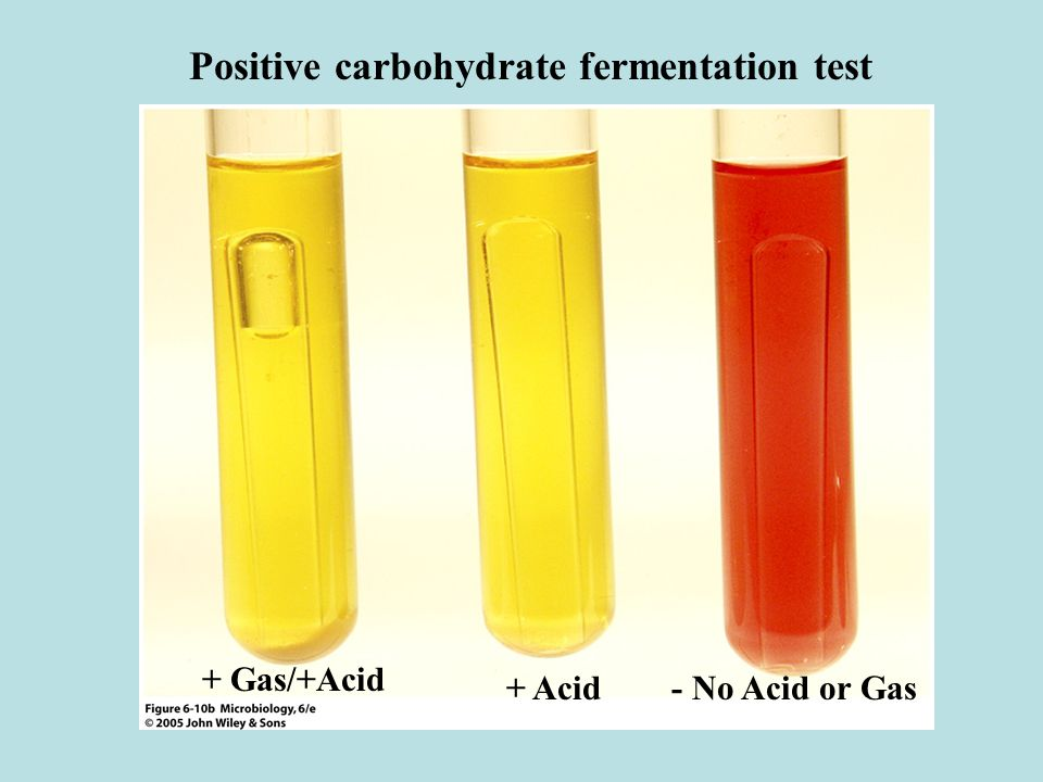 carbohydrate fermentation essay